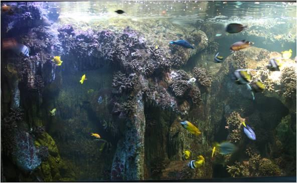 aquarium de Vannes (56) Image215