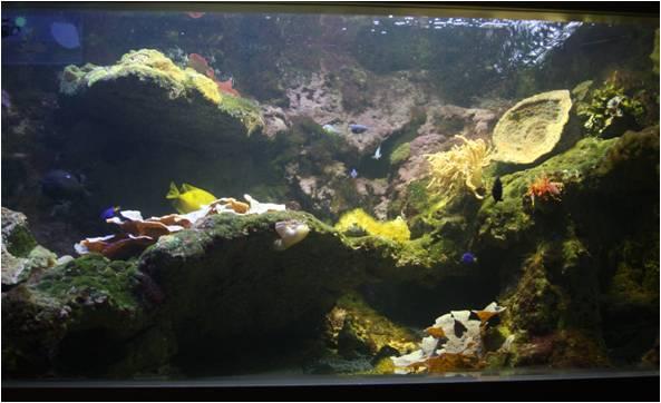 aquarium de Vannes (56) Image216