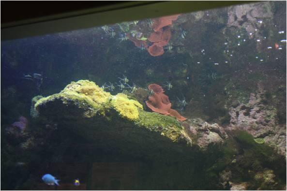 aquarium de Vannes (56) Image310