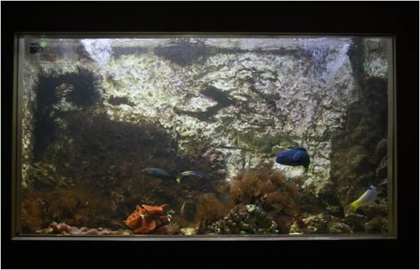aquarium de Vannes (56) Image311