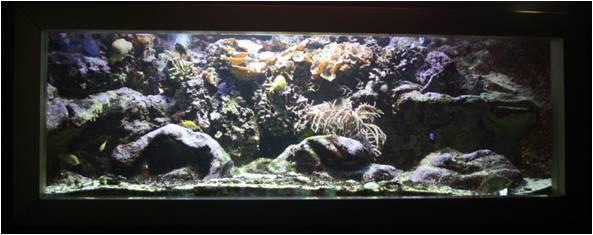 aquarium de Vannes (56) Image312