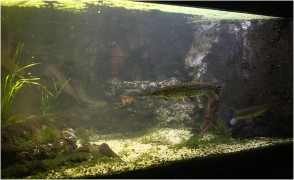 aquarium de Vannes (56) Image313