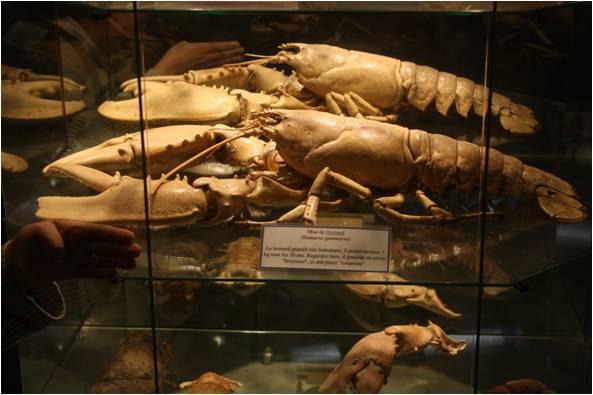 aquarium de Vannes (56) Image410