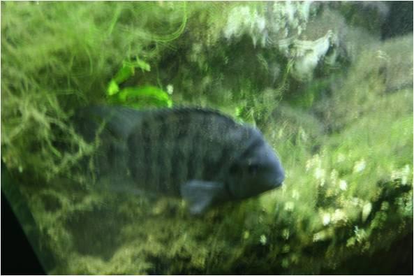 aquarium de Vannes (56) Image411