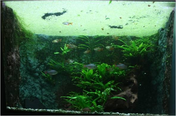 aquarium de Vannes (56) Image412