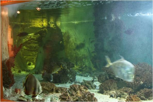 aquarium de Vannes (56) Image413