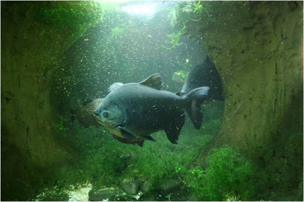 aquarium de Vannes (56) Image414