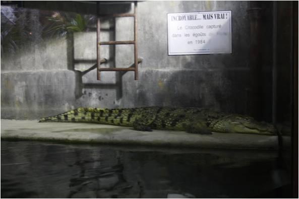 aquarium de Vannes (56) Image415