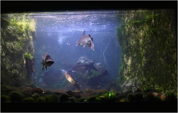 aquarium de Vannes (56) Image416