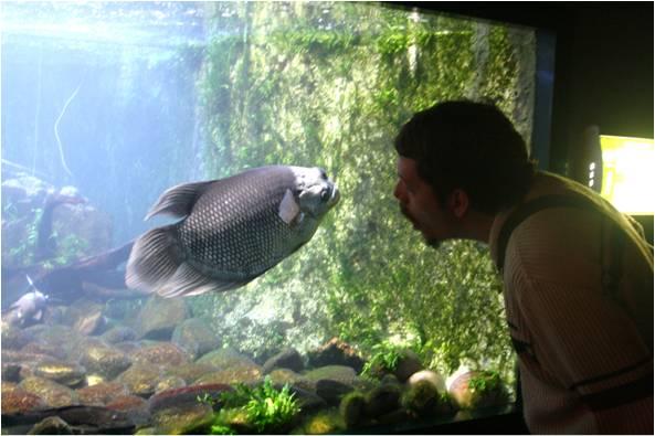 aquarium de Vannes (56) Image510
