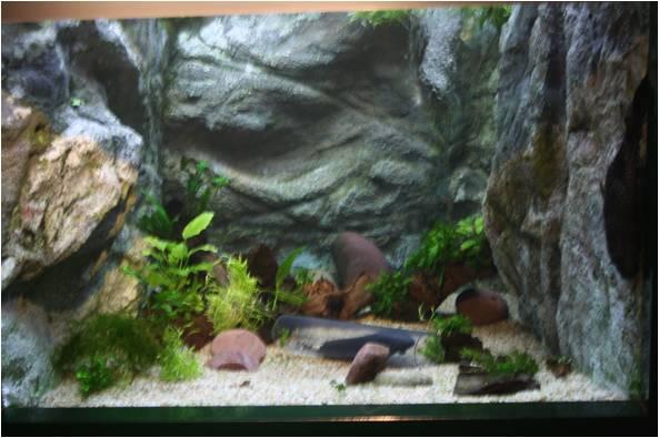 aquarium de Vannes (56) Image511