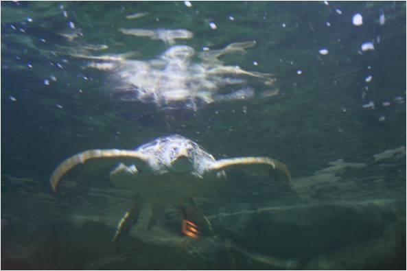 aquarium de Vannes (56) Image512