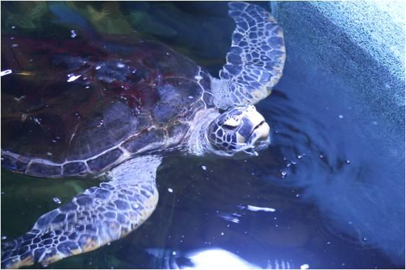 aquarium de Vannes (56) Image513