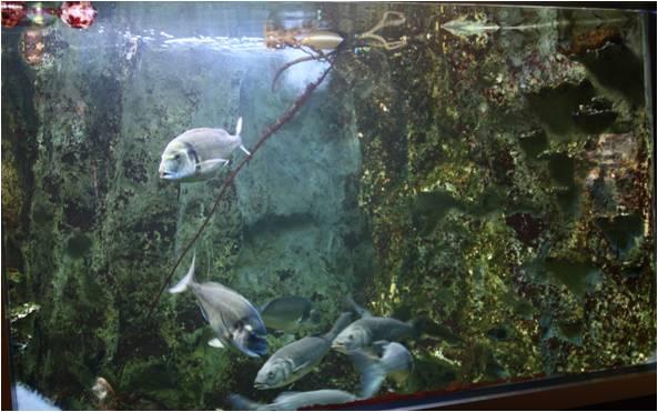 aquarium de Vannes (56) Image610