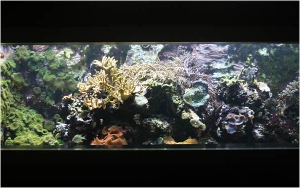 aquarium de Vannes (56) Image710