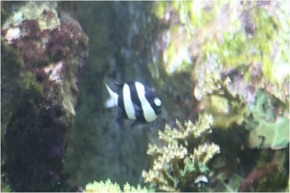 aquarium de Vannes (56) Image910