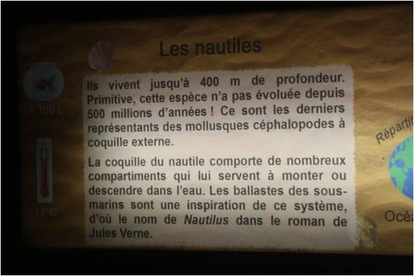 aquarium de Vannes (56) Nautil11