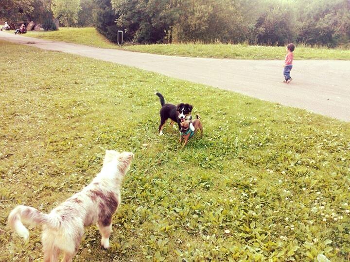 On progresse, on progresse! Frisbee VS gros chiens Image64