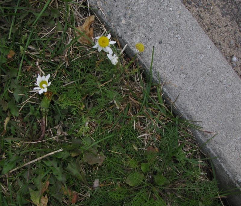 Plantes à identifier de sous-bois Captur92