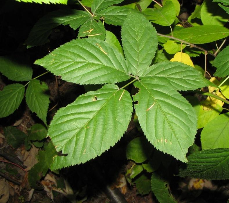 Plantes à identifier de sous-bois Captur93