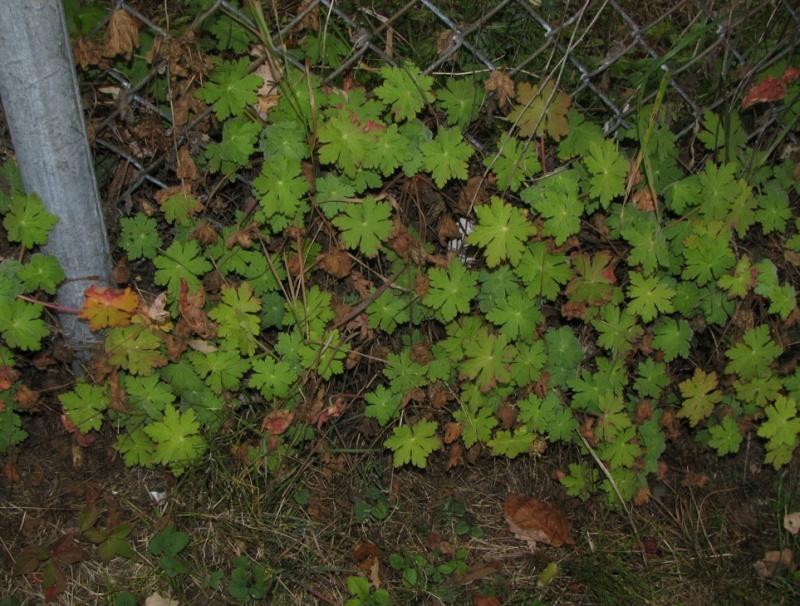 Plantes à identifier de sous-bois Captur94
