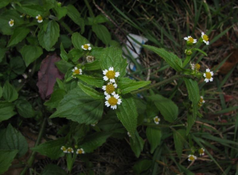 Plantes à identifier de sous-bois Captur95