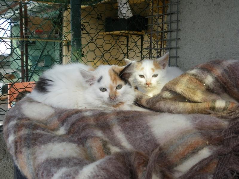 EMIR (chaton européen blanc et roux) Imgp0029