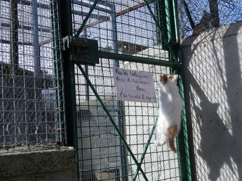 EVEN (chaton mâle angora blanc et roux) Imgp0033