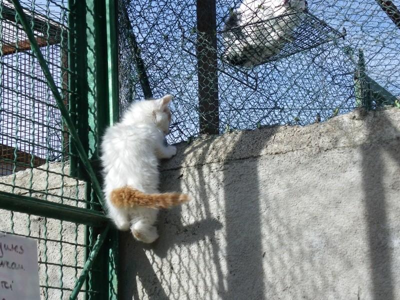 EVEN (chaton mâle angora blanc et roux) Imgp0034