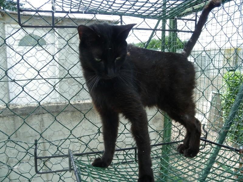 BIKER(mâle européenn noir)  Imgp9030