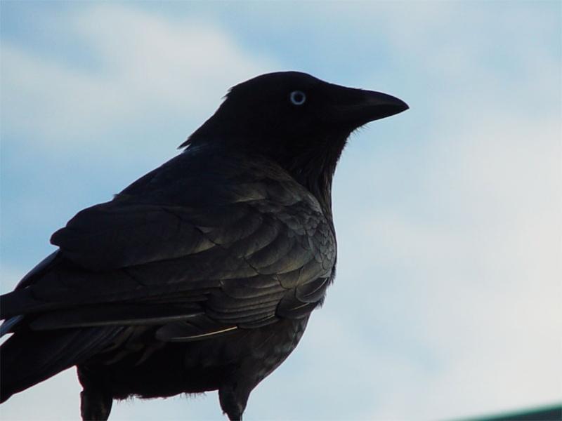 Agrou ♥ Raven11