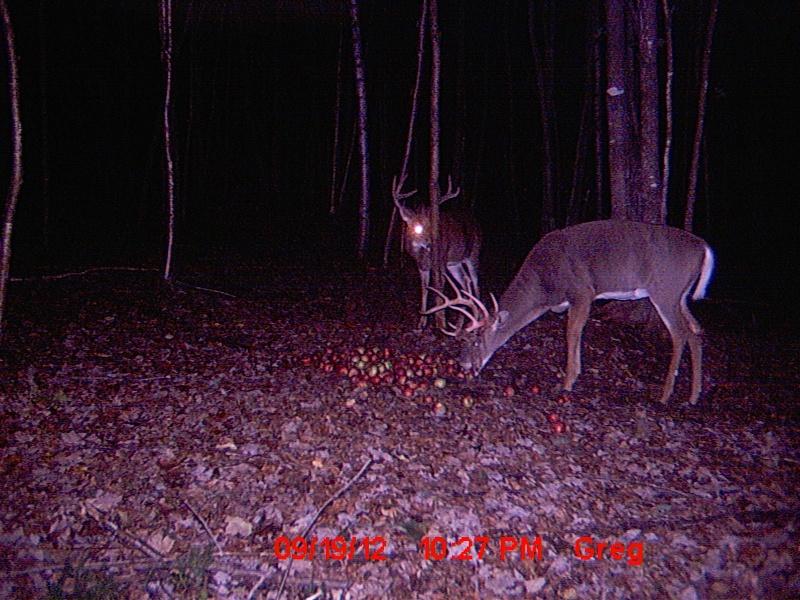 Votre défi de chasse pour 2013 Image26