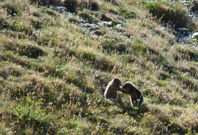 Aujourdhui,j'ai laissés les rabots a l'atelier - Page 7 Marmot15