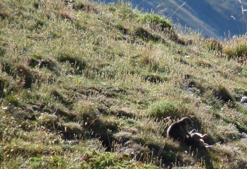 Aujourdhui,j'ai laissés les rabots a l'atelier - Page 7 Marmot16