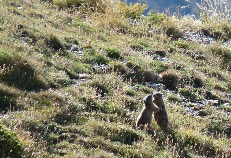 Aujourdhui,j'ai laissés les rabots a l'atelier - Page 7 Marmot17