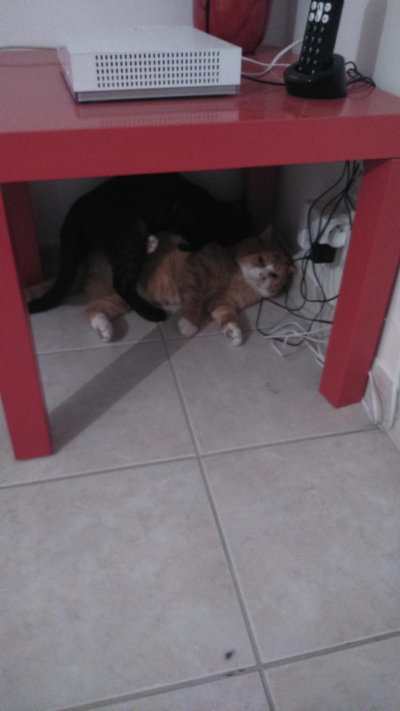 Photos de notre beau Garfield Dsc_0311