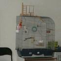 Vends grande volière + cage (91) 13759810