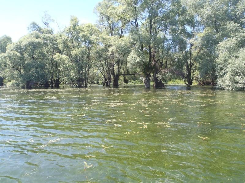 le lac de la fôret d'orient P5190015