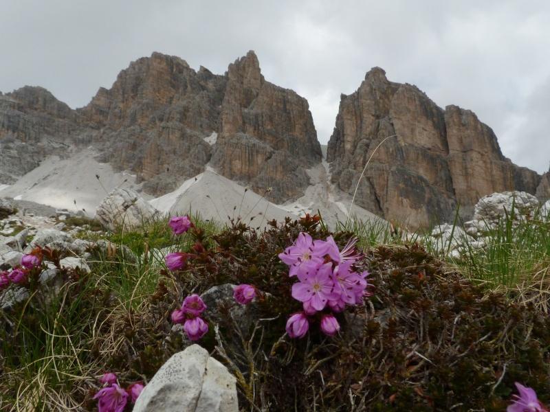 Les Dolomites d'Ampezzo et le Monte Pelmo P1470611