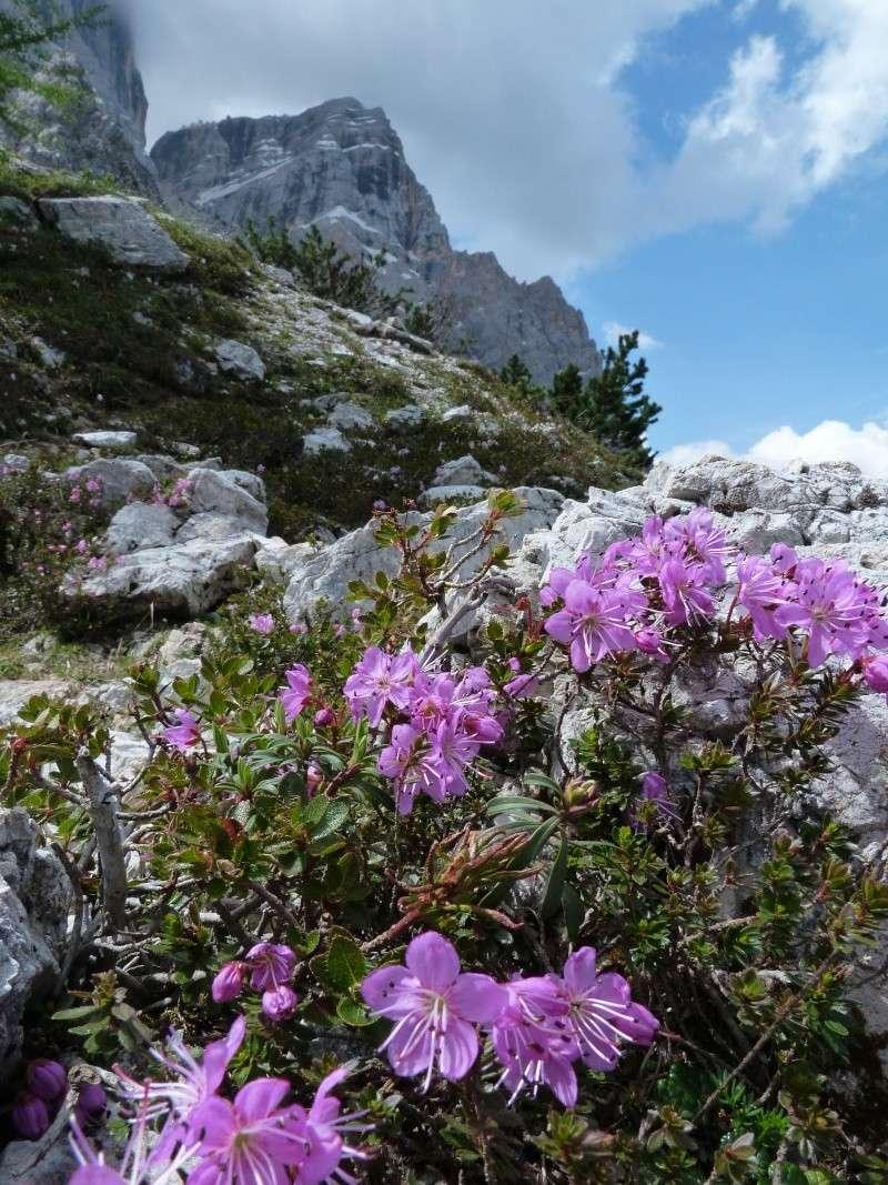 Les Dolomites d'Ampezzo et le Monte Pelmo P1480010