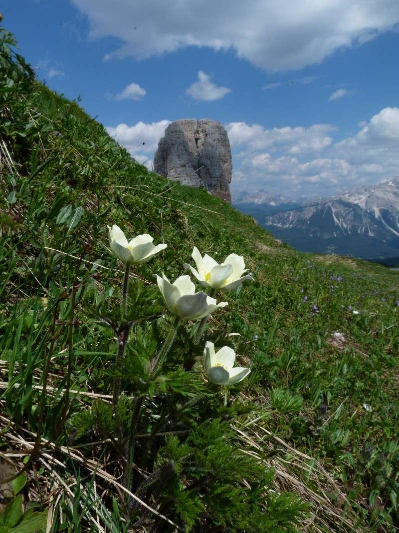 Les Dolomites d'Ampezzo et le Monte Pelmo - Page 2 P1480910