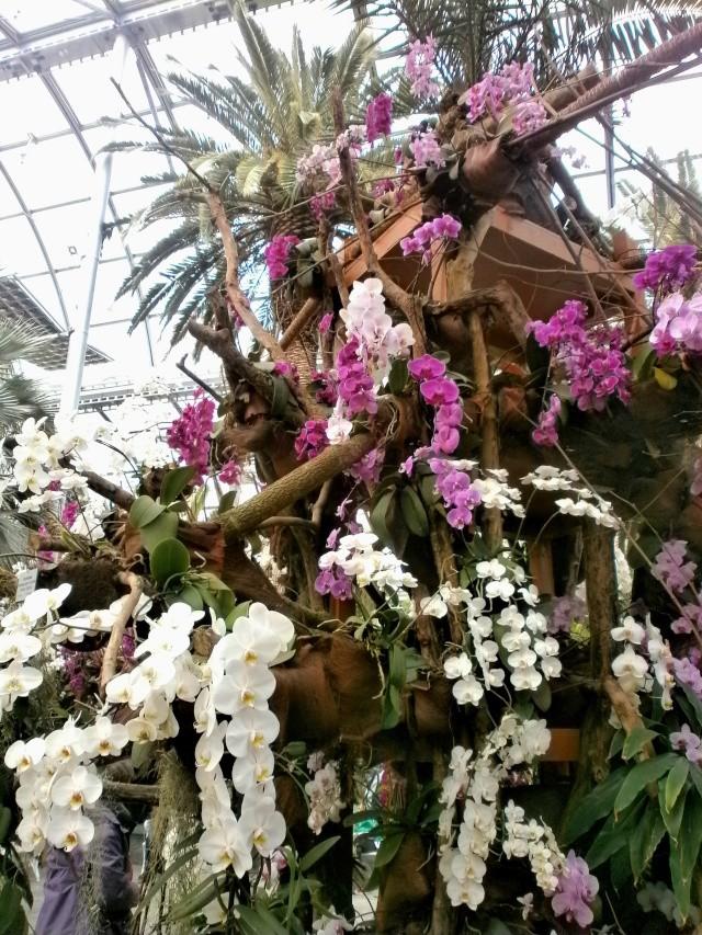 Orchideen-Ausstellungen aus aller Welt - Seite 3 Orchid10