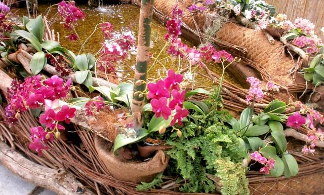 Orchideen-Ausstellungen aus aller Welt - Seite 3 Orchid12