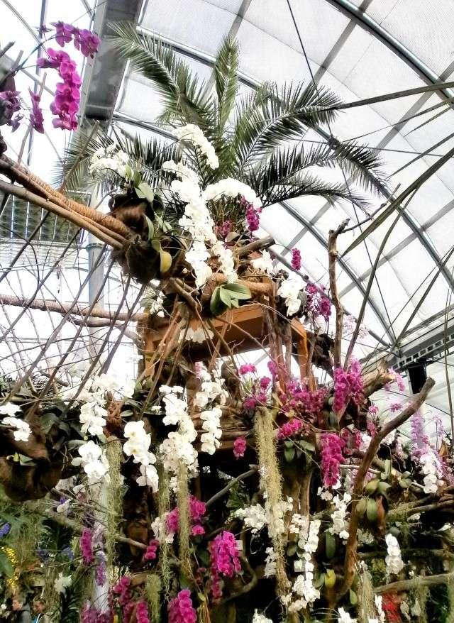 Orchideen-Ausstellungen aus aller Welt - Seite 3 Orchid14