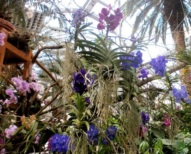 Orchideen-Ausstellungen aus aller Welt - Seite 3 Vandee10