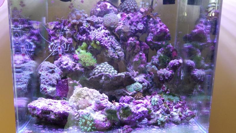reef nano 20140613