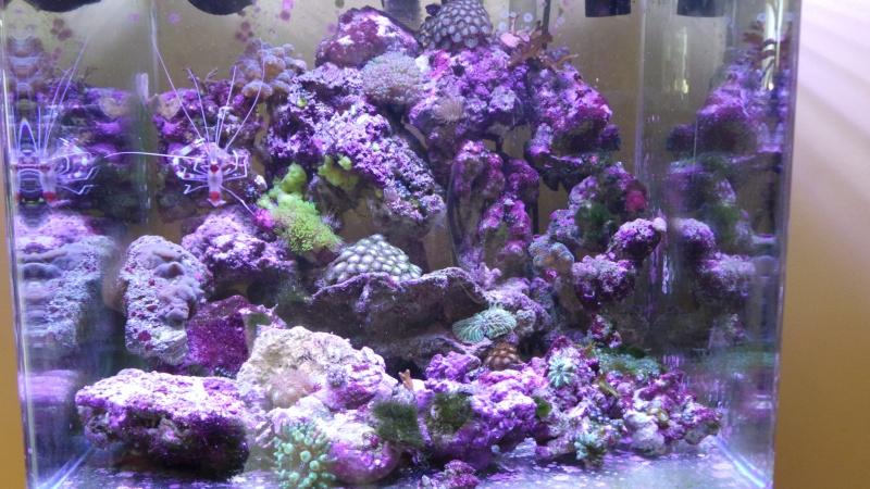 reef nano 20140614