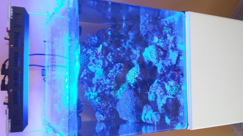 reef nano 20140819