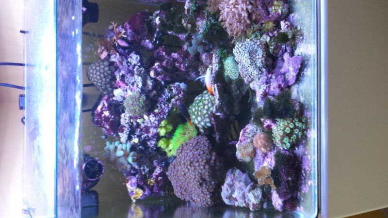 reef nano 20140820