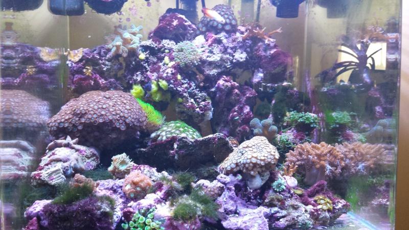 reef nano 20140821